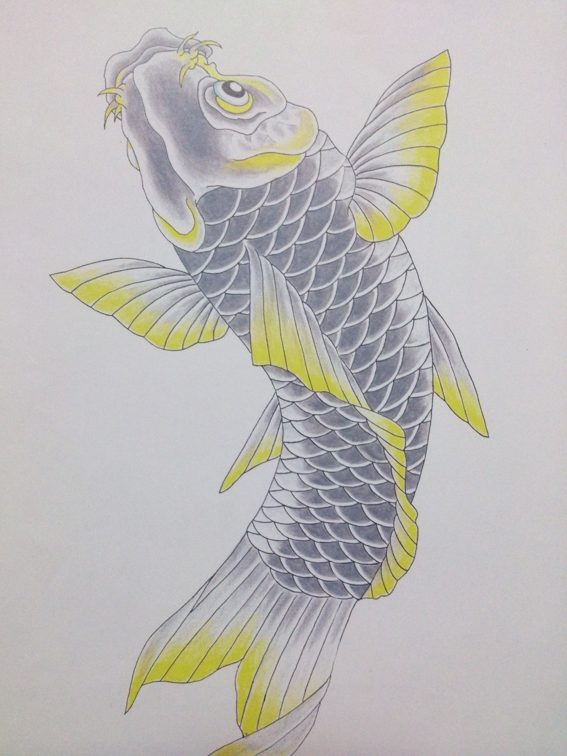 鯉 タトゥー